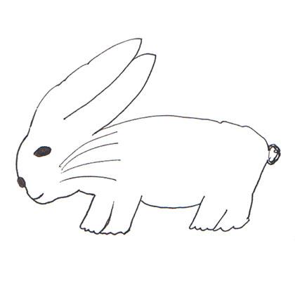 20ウサギ