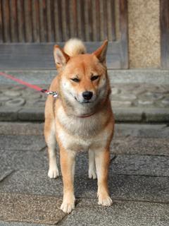 dog[1]