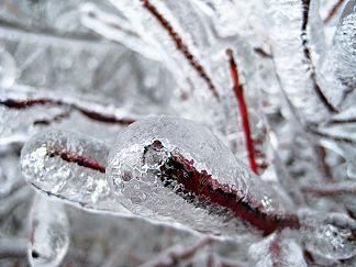 これが雨氷です
