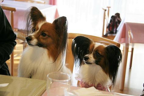 レイラちゃん&リッキー@朝食時