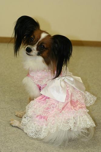 レイラちゃんドレス姿