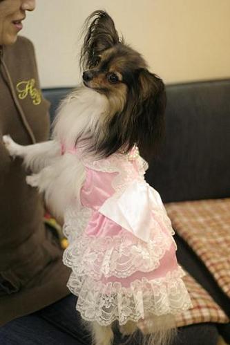 ニコラちゃんドレス姿