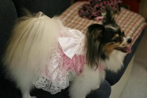 リリーちゃんドレス姿
