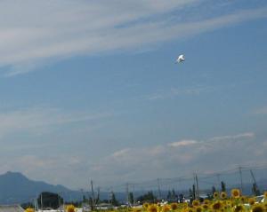 20090911-4.jpg