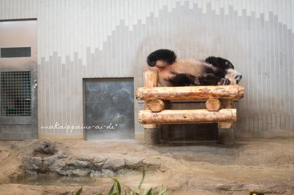 panda-3.jpg