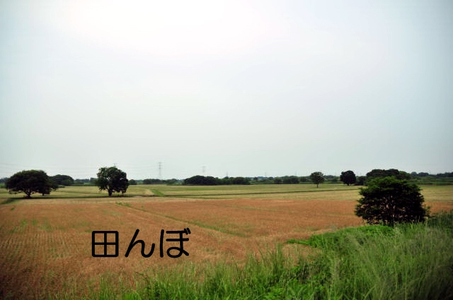 DSC_6864100602.jpg