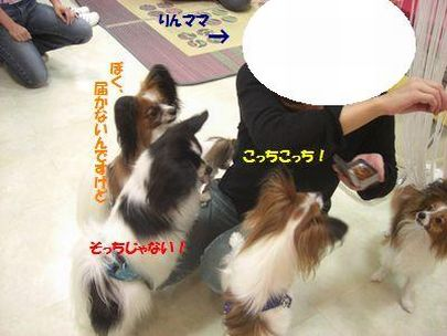 2009_0910_184601-CIMG3567.jpg