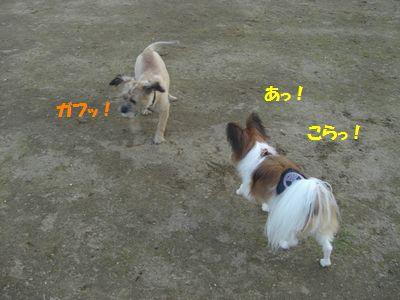 2009_0921_165455-CIMG3908.jpg