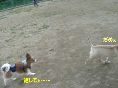 2009_0921_165503-CIMG3909.jpg