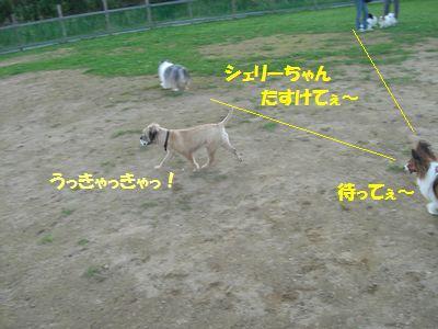 2009_0921_165508-CIMG3910.jpg