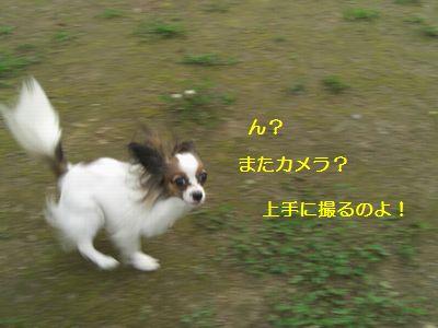 2009_1005_151252-CIMG4193.jpg