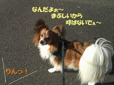 2009_1015_080547-CIMG4622.jpg