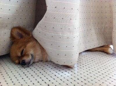 メグ寝姿②