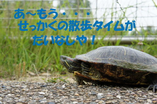 DSC04236.JPGのコピー.psdkame