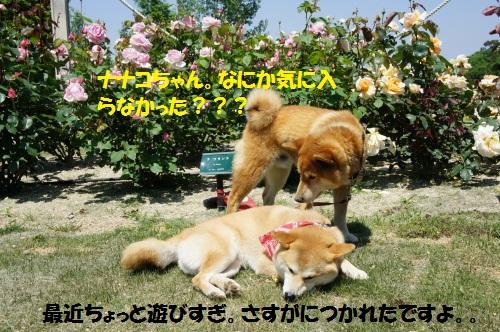 DSC04036_20110521211133.jpg