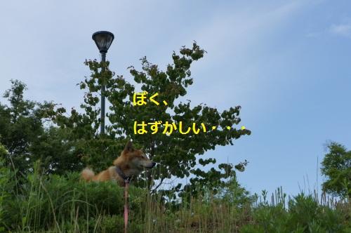 DSC04089.jpg