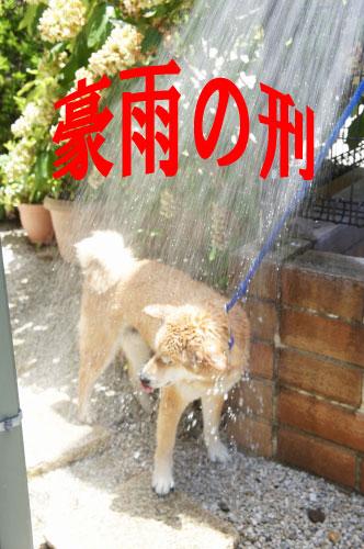 DSC04521_20110709145716.jpg