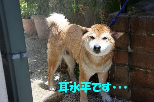 DSC04524_20110709145715.jpg