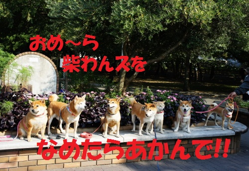 DSC06004_20111017132418.jpg