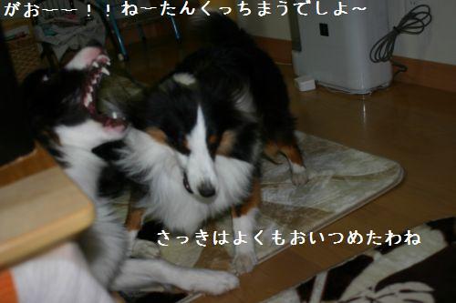 IMG_0947_20091211194853.jpg