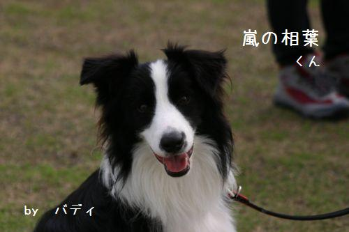 IMG_8933.jpg