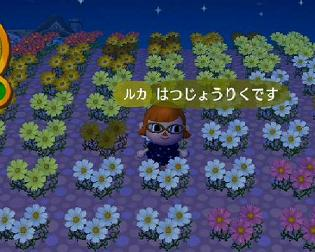 091108_hana.jpg