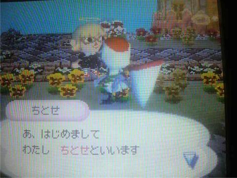 123_chitose.jpg