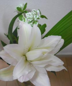 yaeyuri1_convert_20110811001516.jpg