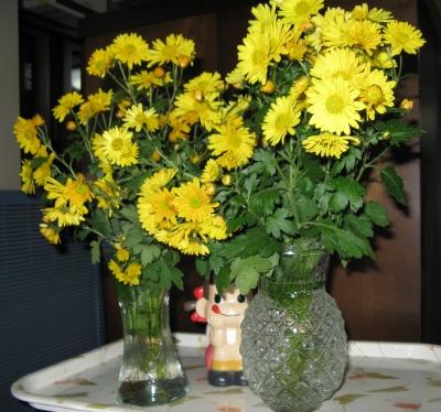 小菊がたくさん咲きました2010