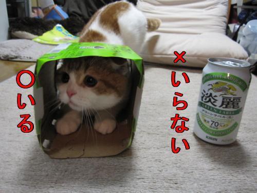 おビール!!