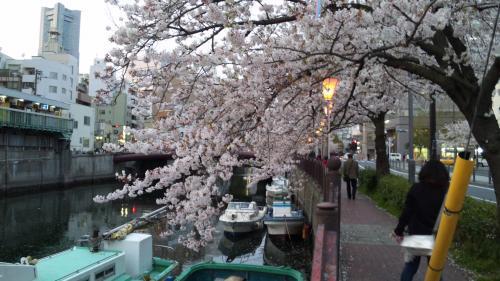 桜とランドマークタワー
