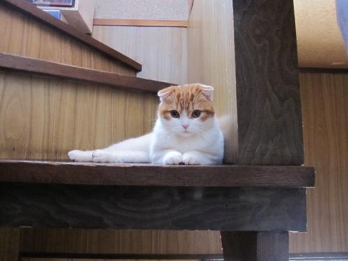 階段とろく