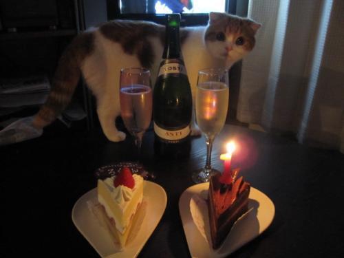 僕のお祝いにかこつけて飲むのかい?