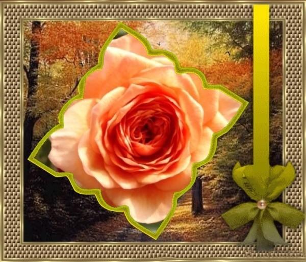frametoy_20091102094103kOvq.jpg