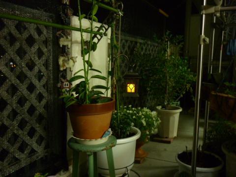 お庭で008