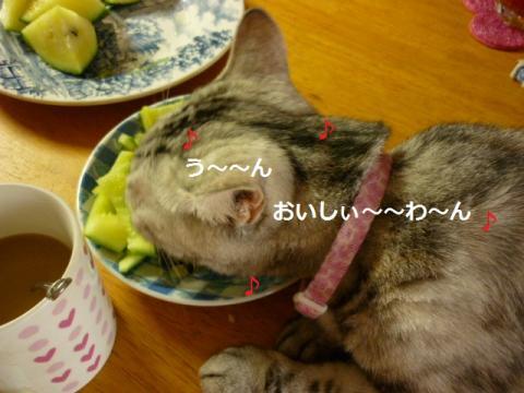 食いしん坊003