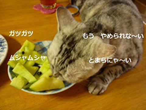 食いしん坊004