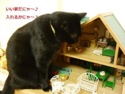 家を襲う猫たん1