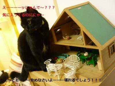 家を襲う猫たん3