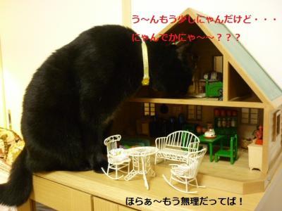 家を襲う猫たん2