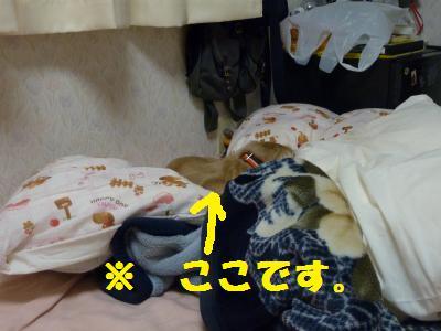 寝床づくり4
