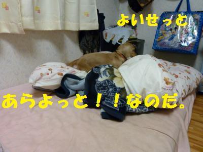 寝床づくり3