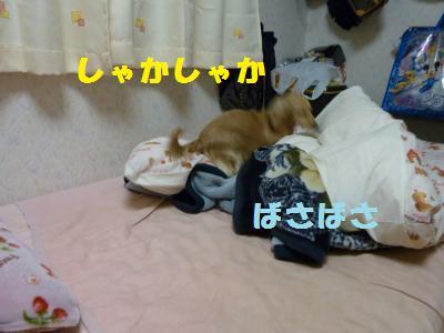 寝床づくり2
