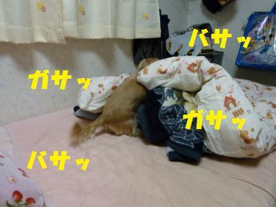寝床づくり1