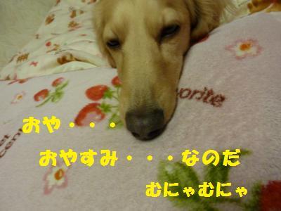 おやすみなのだ