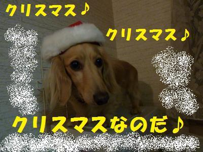 クリスマスなのだ