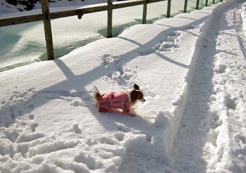 100115ピョン新雪の中