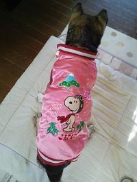 太郎ピンク