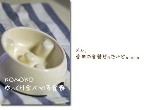 KONOKO_20110214150250.jpg