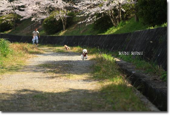 RUN-RUN.jpg